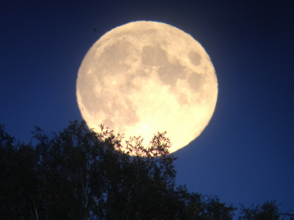 1 fullmåne