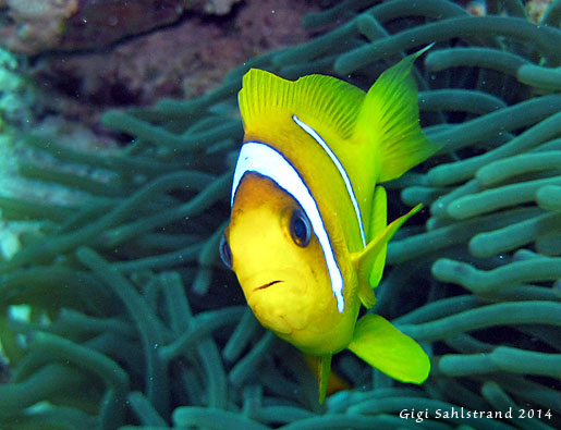 1-IMG_6444-Nemo