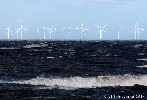 1-P1070439-vindkraftfält