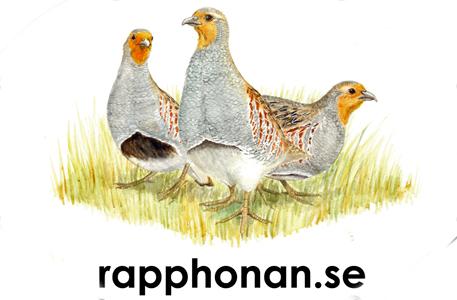 1a-Rappbild-00