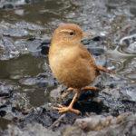 bilder på alla fåglar i sverige