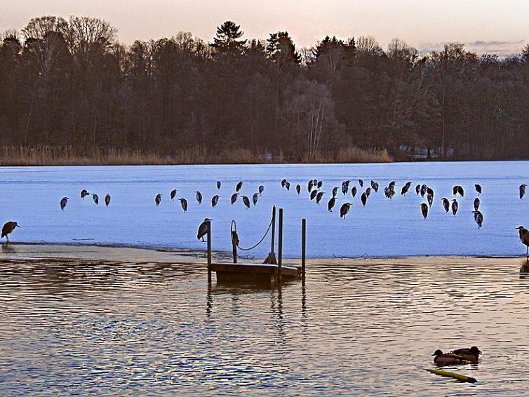 Fågelvandring runt sjöarna Löt- och Råstasjön