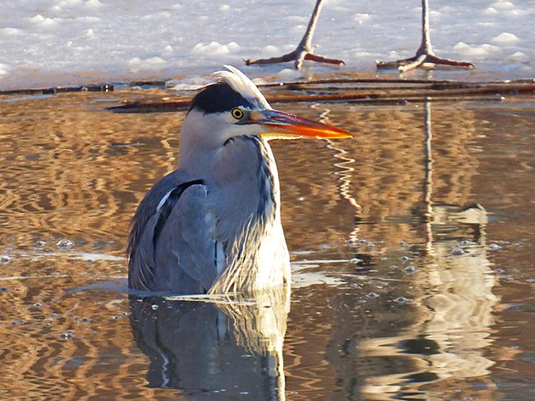 Fågelvandring vid Råstasjön