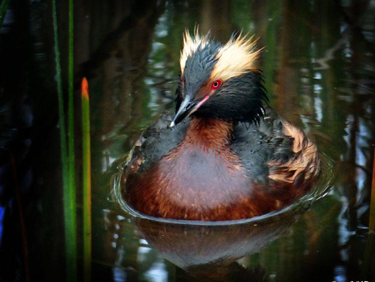 Fågelvandring vid Kyrksjön
