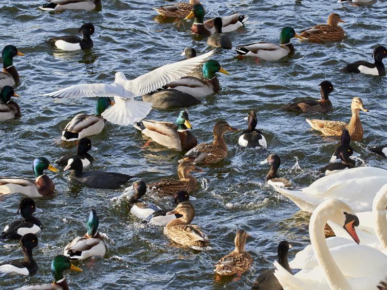 Fågelvandring på Lindö i Kalmar