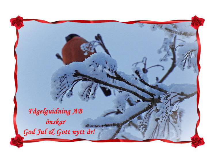 "<span style=""color: red;""><strong>God jul!</strong>"