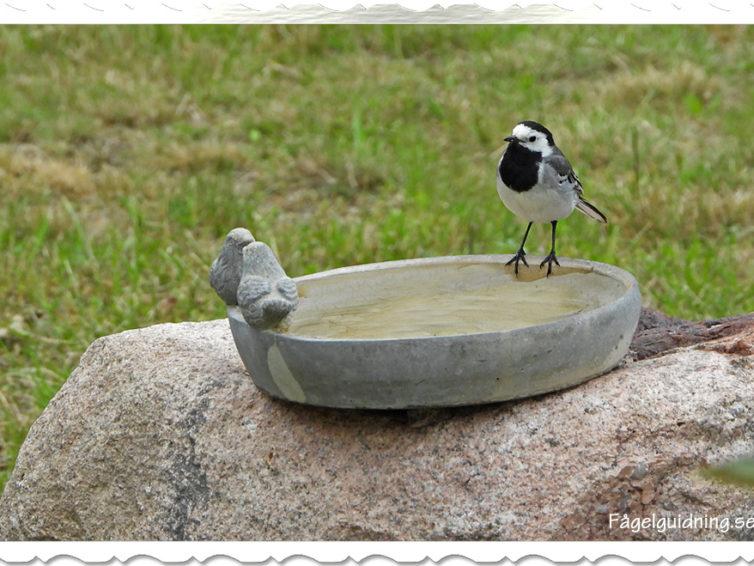 Framtid med Fågelguidning AB!