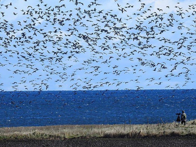 ÖLAND – solen, vinden och fåglarnas ö!
