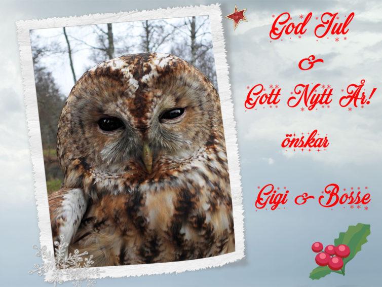 Julhälsning från oss!