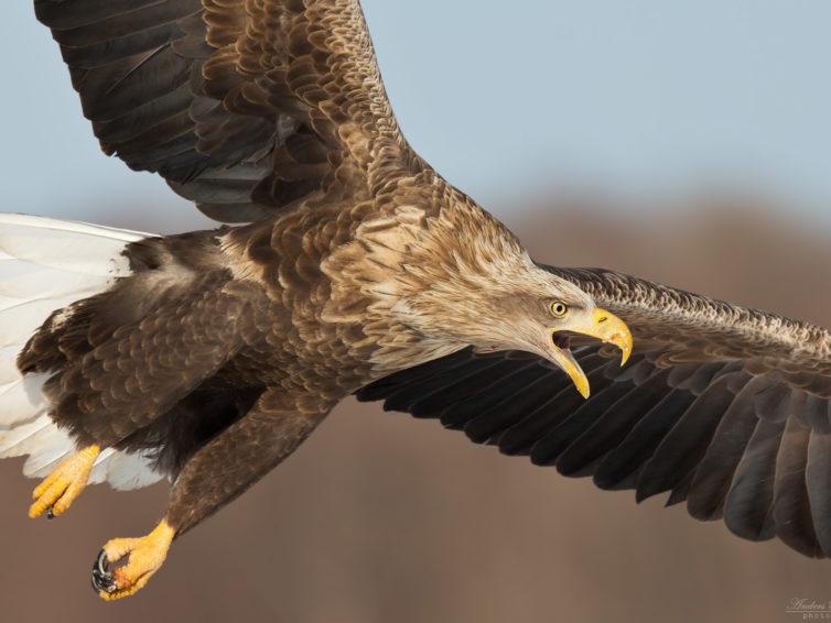 Lär dig fotografera fåglar och djur, webbkurs med Anders Blomdahl