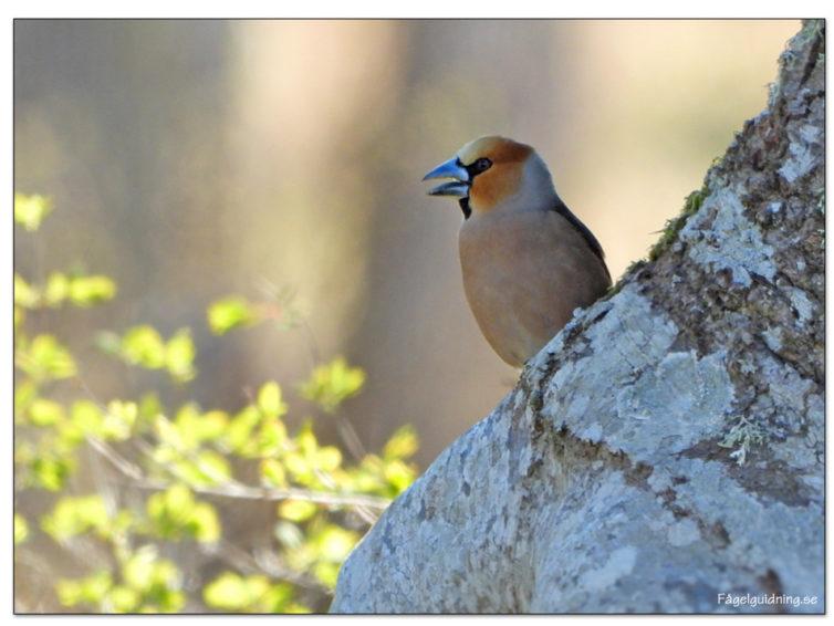Fågelguidning och Naturspecialisten har tecknat samarbetsavtal